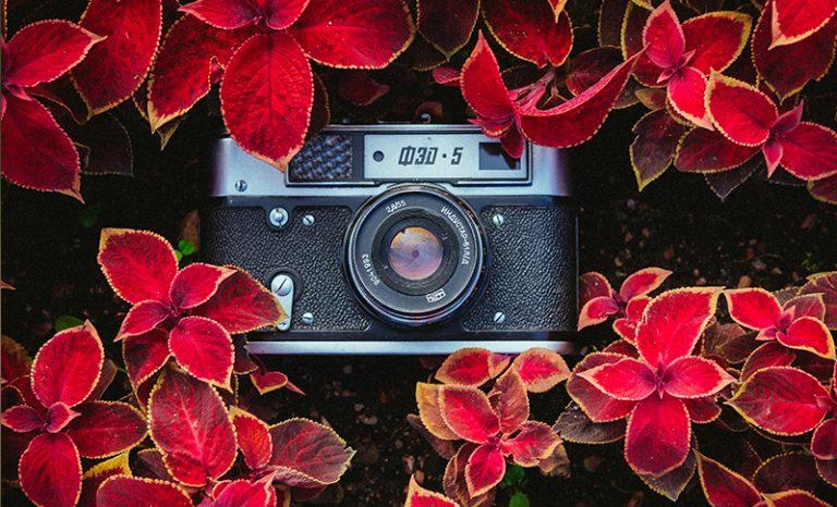 Imagen portada Cómo mantener a salvo tus fotografías