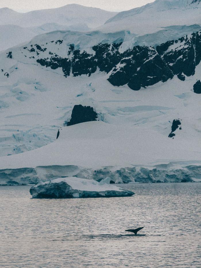 Antarctica by Olympus