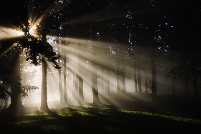 curso-online-de-fotografia-luz