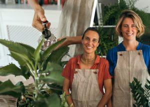Plantas de interior: paisajismo en casa