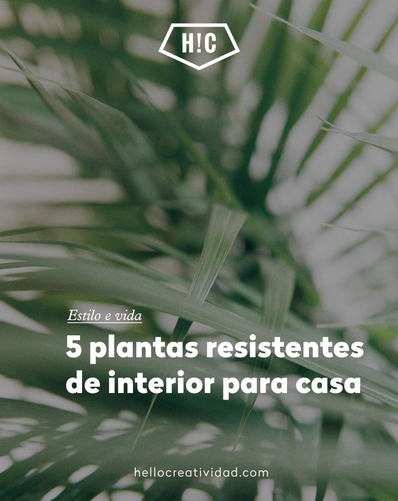 5 plantas de interior resistentes para casa