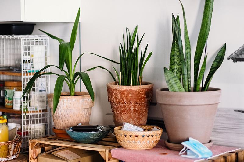 plantas resistentes de interior
