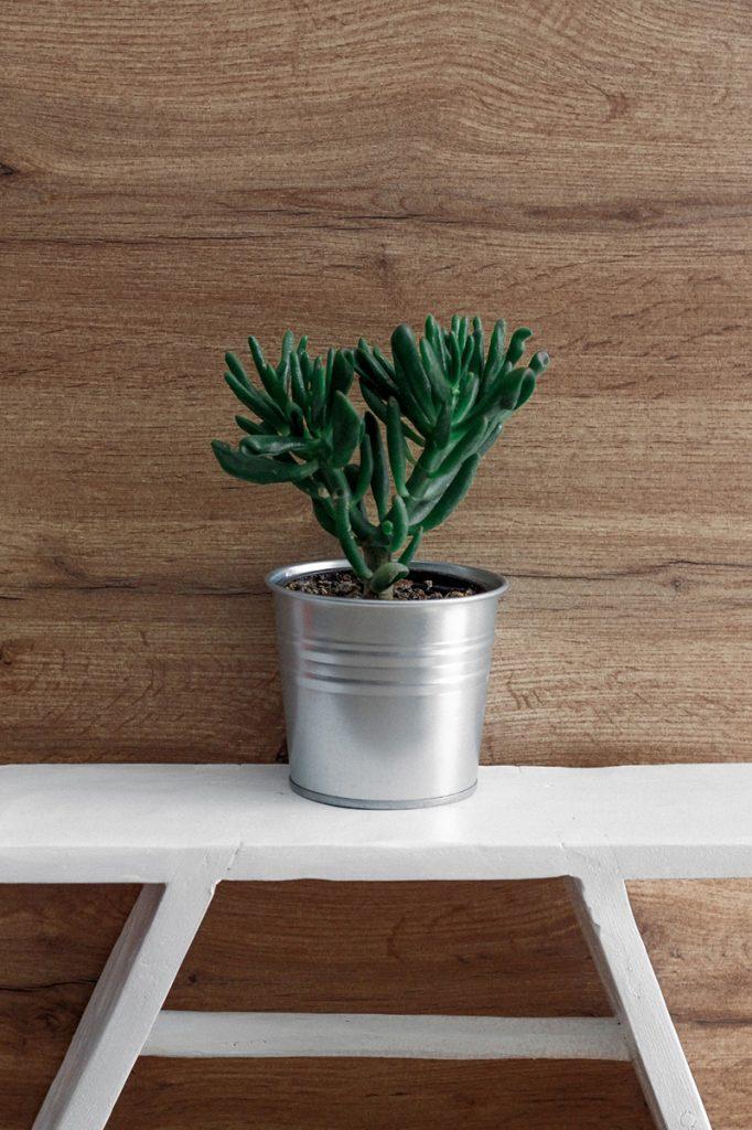 consejos para mantener plantas