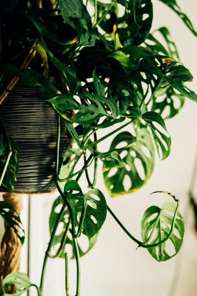 aprende a cuidar tus plantas
