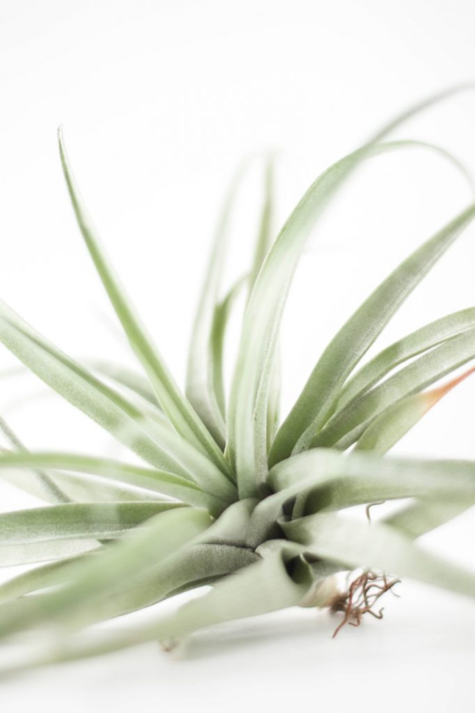 trucos para cuidar tus plantas