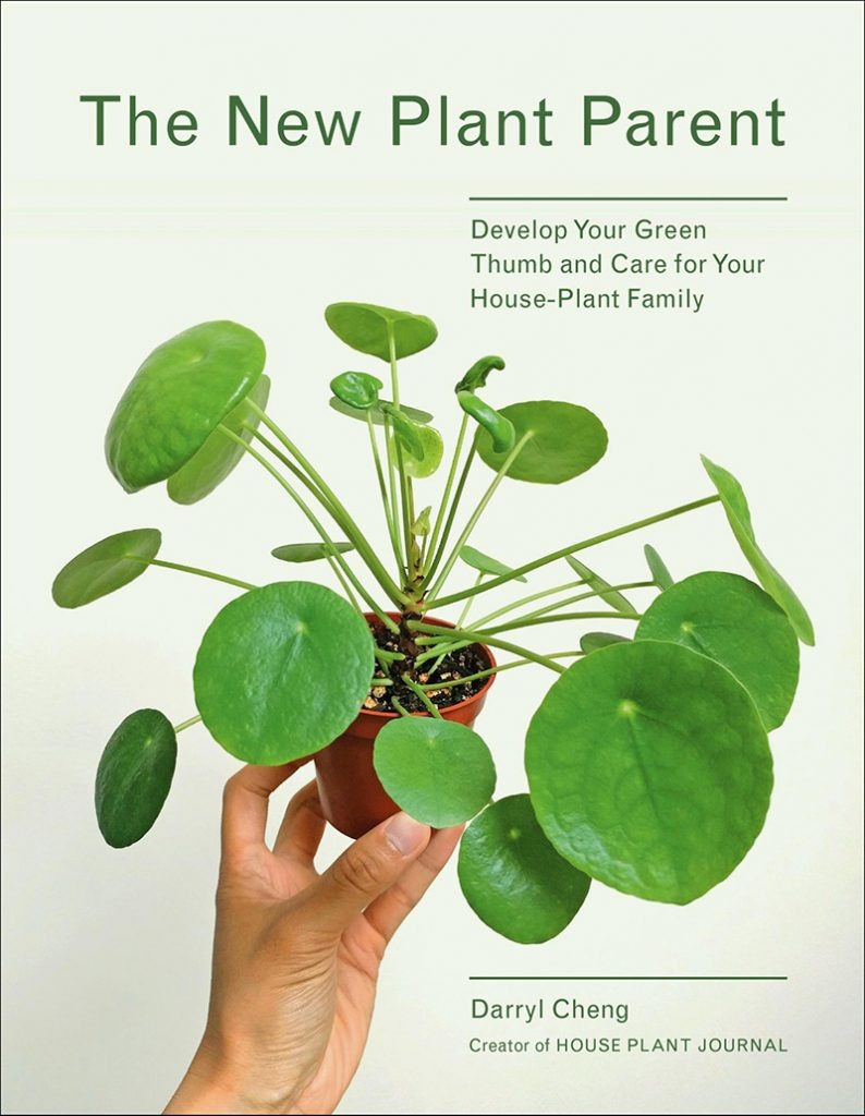 consejos para cuidar tus plantas en casa